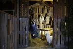 Seimipolulle tulijoita tervehti ensimmäisenä suuri seimiasetelma. Sen luona olivat myös lampaamme Esteri ja Pipsa.