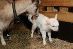 Jippu hoitaa pienoistaan