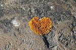 Joskus kallion kyljestä voi löytää salaperäisiä rakkausviestejä...