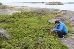 Kalliopainanteesta matalan kanervamaton seasta näyttää löytyneen muutakin kiinnostavaa kuin vain merikotkan siipisulka...