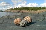 Jotkut pienistä kivistä muistuttavat aurinkokuntamme planeettoja