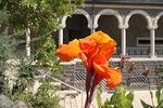 Israelissa on paljon toinen toistaan kauniimpia kukkia