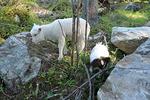 Sally oli tietysti mukana seikkailemassa. Nyt Esteri on jo paljon koiraa suurempi.