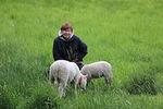 Kaija ja kaksi lammasta