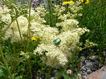 ...kukkineen ja monenlaisine pörriäsineen