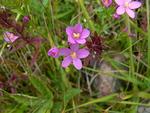 Kukkia löytyi myös luotojen kallioiden painanteista ja rantakivien välistä