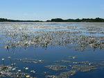 Björkön saaren rannat olivat yhtä kukkamerta